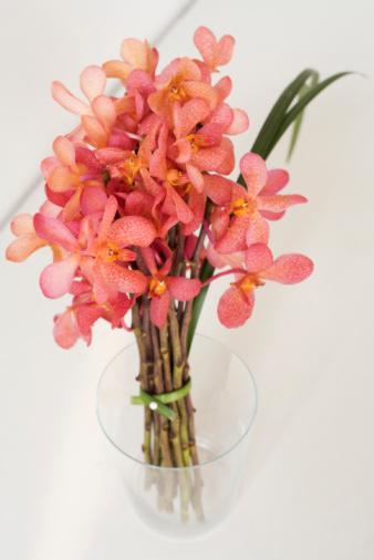 01-Haz-tu-propio-ramo-de-orquideas---Elabora-un-bello-elegante-y-femenino-ramo-de-orquideas----Facil