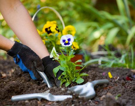 garden-rent-lg