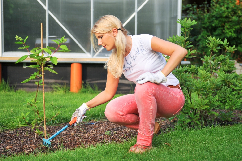 how-to-plant-a-tree-low-res